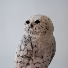 Snowy Owl On Post