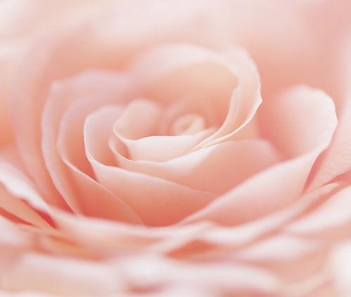 iStock-875792826-rose_edited.jpg