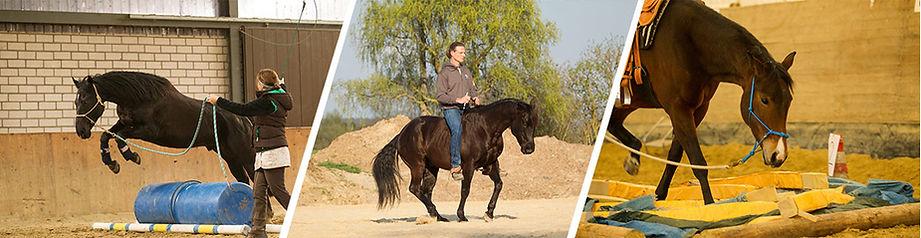horsetraining.jpg