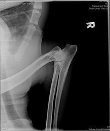 oryxradiographs1.jpg
