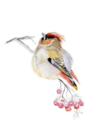 Jan Bird 5x7.jpg