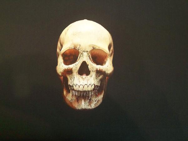 3-1.skull.JPG