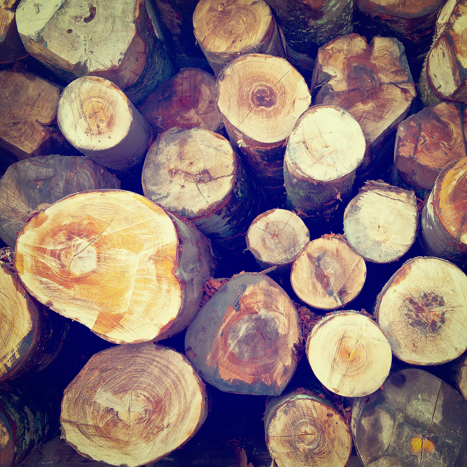 Chopping Wood, yeah!