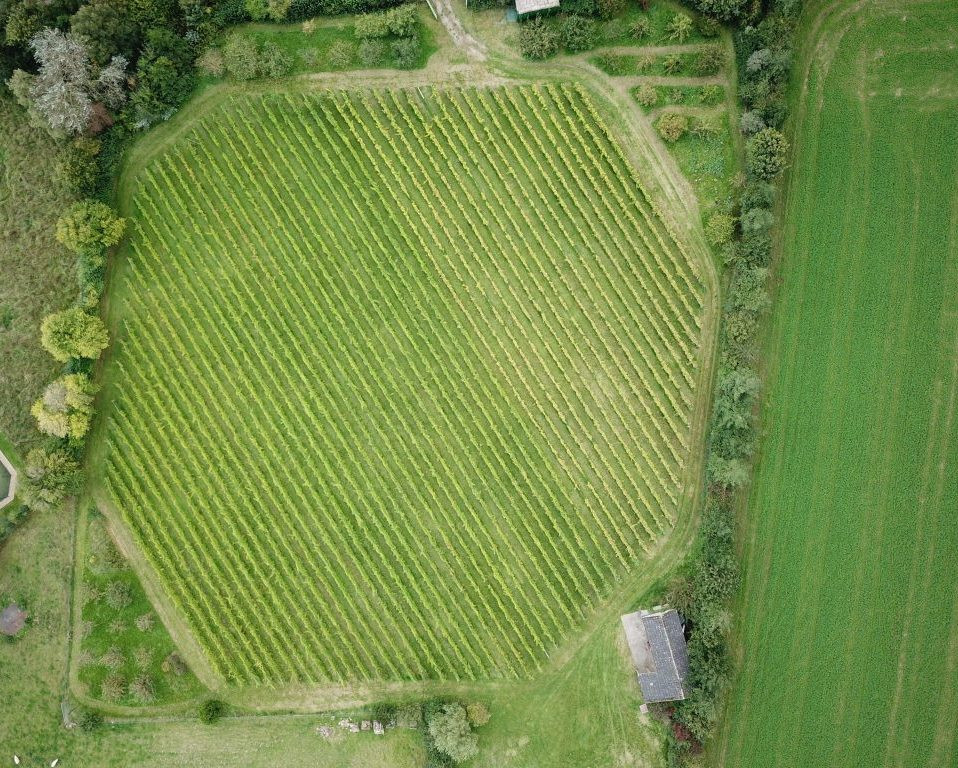 Aerial view of Quoins Vineyard with rows of vines