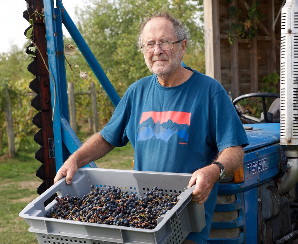 Vineyard owner carrying crate of grapes