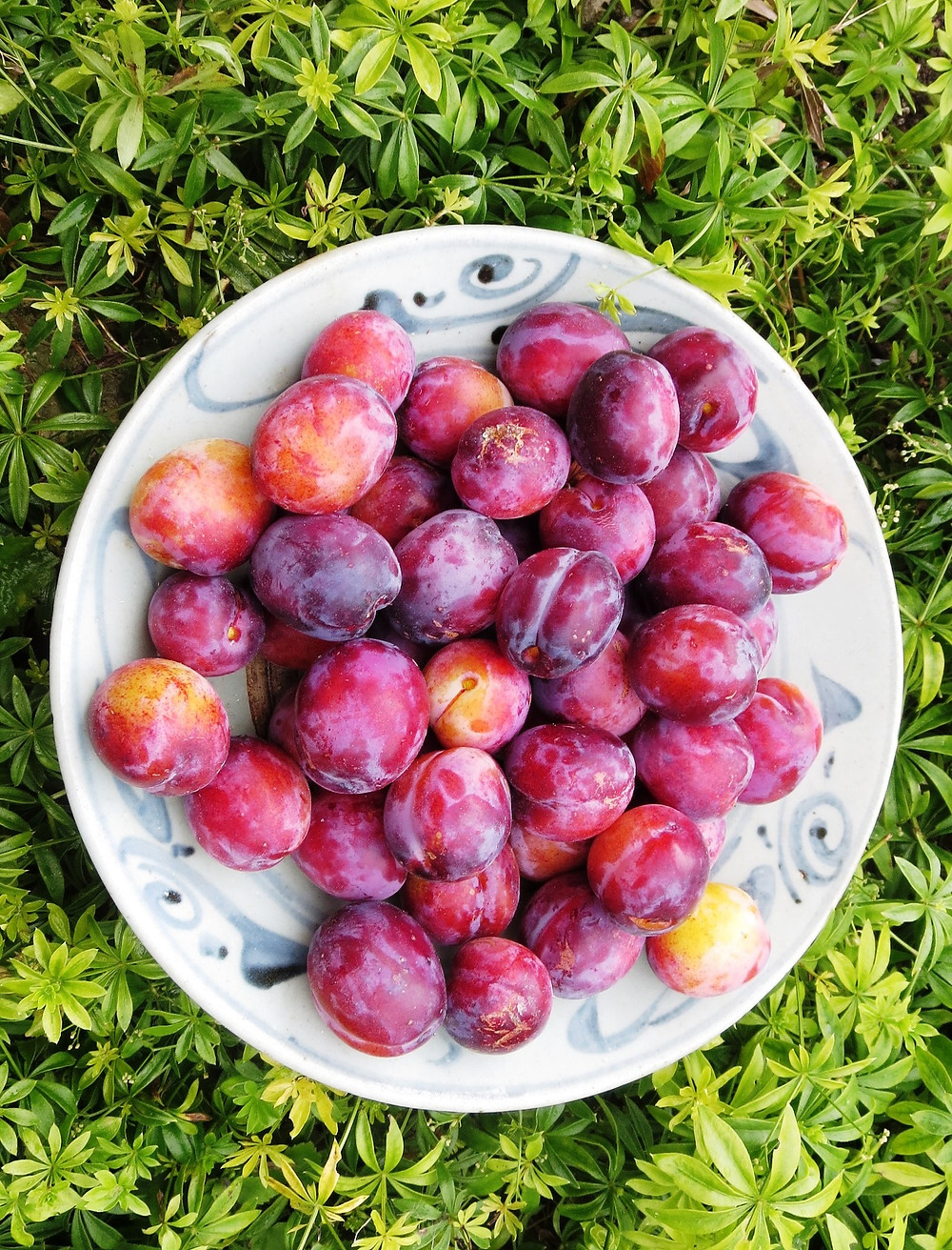 Bowl of freshly picked plums