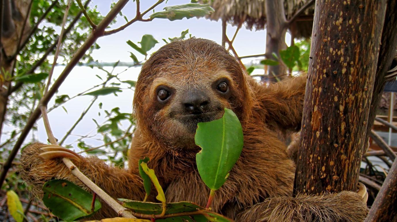 A random sloth
