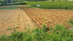 Griffage Plantation
