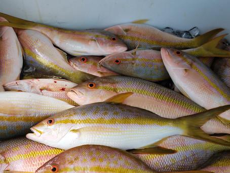 Welcome to the FOODCHAIN FISHING, Marathon, FL fishing report.