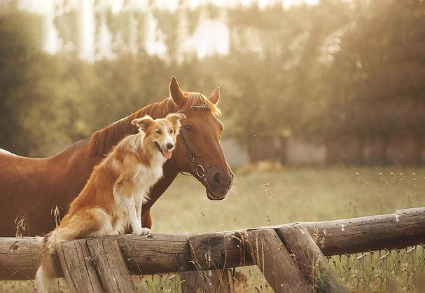 horse and dog2.jpg