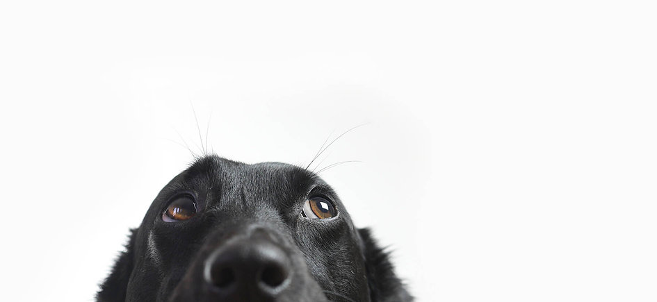 black dog eyes looking up.jpg