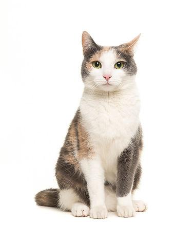 cat w white background.jpg