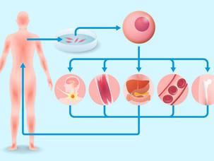 Regenerative Medicine Looks to Make Big Gains