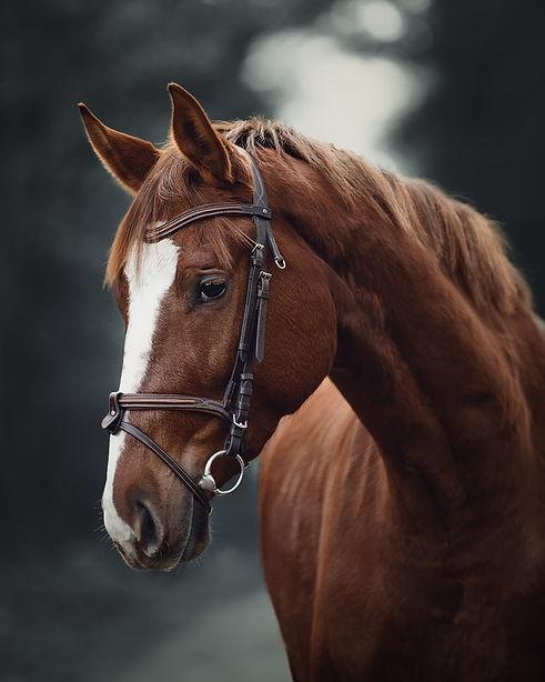 Equine Still.jpg