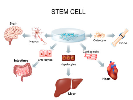 Revolutionary Procedure Could Turn the Page on Stem Cells