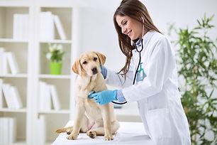 woman vet w dog.jpg