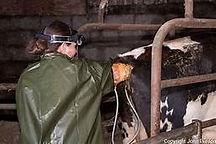 Cow Tech.jpg