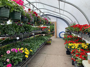 Greenhouse picture 1.jpg