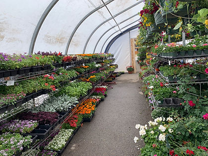 Greenhouse picture 2.jpg
