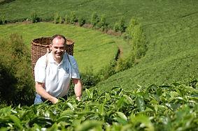 Teaology - Chinga Tea Plantation, Kenya