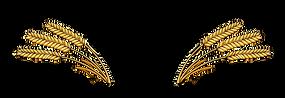 CHONI Logo (Transparent Back).png