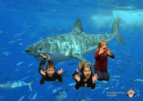 Mit Haien schwimmen, an deiner Geburtstagparty bei Heidi's Photo Chalet Interlaken möglich