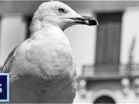 Schwarz-Weiß Bilder erzeugen