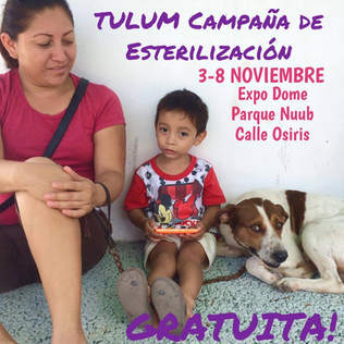 Tulum Sterilization Clinic
