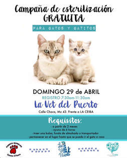 Puerto Morelos Cat Clinic