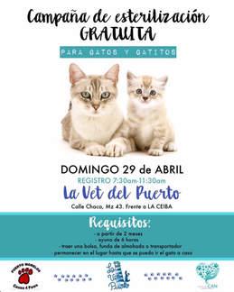 Puerto Morelos Cat Clinic