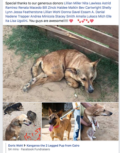 Egypt paralized dogs Sponsorships