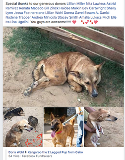 Egypt paralized dogs Sponsorships