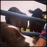 Deuce Farm Freezer Beef.jpg