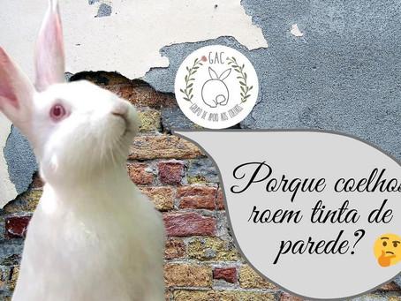 Por que coelhos roem tinta de parede?
