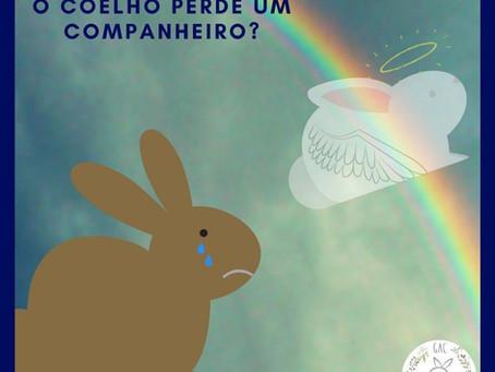 O que fazer quando o coelho perde o companheiro?