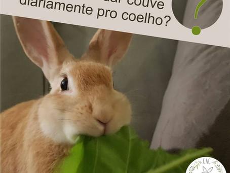 Por que não dar couve diariamente pro coelho?