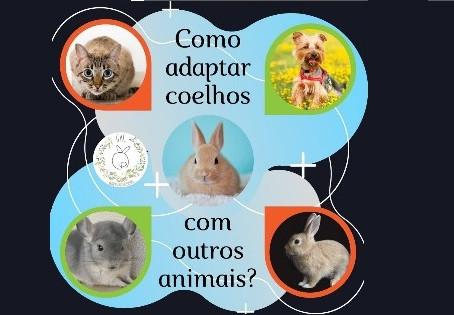 Como adaptar coelho com outros animais?