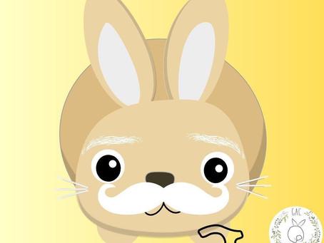 Dicas de cuidados com coelhos idosos