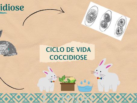 Principais doenças que afetam os coelhos: COCCIDIOSE 