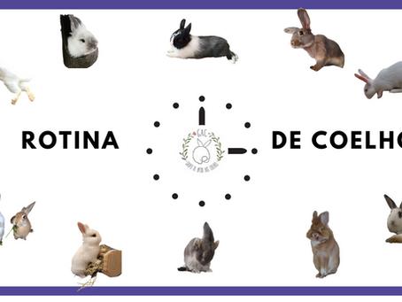 Importância da rotina pro coelho.