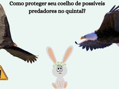 Como proteger seu coelho de predadores no quintal?