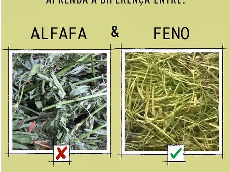 Feno de capim vs Feno de alfafa