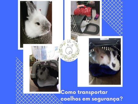 Como transportar coelhos em segurança?