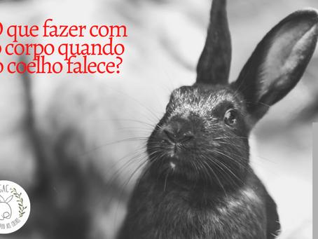 O que fazer com o corpo quando o coelho falece?
