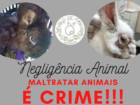 Negligência animal.