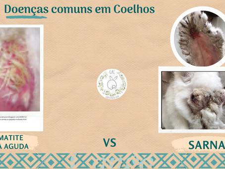 Doenças comuns em coelhos: dermatite vs sarna.