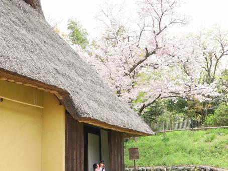 入学記念写真は桜の下で