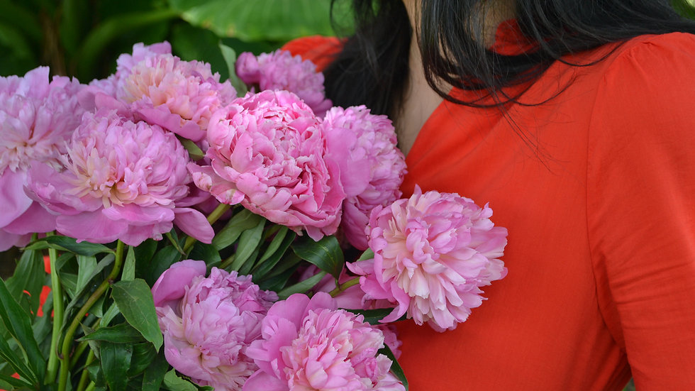 Mixed Peonies By The Stem