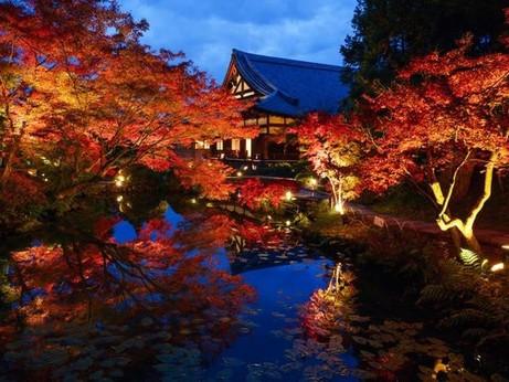 通常非公開の京都・くろ谷 金戒光明寺  11月13日より特別夜間拝観を開催