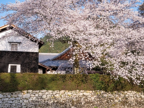 星野リゾート ロテルド比叡 春の京都・比叡山をおさんぽしながら楽しく厄払い 「比叡山やくばらい散歩・春」が登場